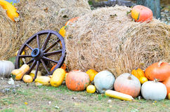 Pumpkins and various vegetables, on bales of straw Royalty Free Stock Image