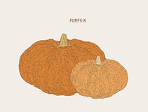 Pumpkins.Vector paint hand drawn picture . Stock Photo