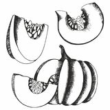 Pumpkins. Vector set of hand drawn illustrations for design Royalty Free Stock Photos