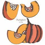 Pumpkins. Vector set of hand drawn illustrations for design Stock Photography
