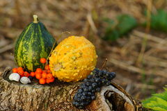 Pumpkins and vegetables in the garden, in the light of the setting sun. Autumn decorations - pumpkins and vegetables in the garden, in the light of the setting Royalty Free Stock Photo