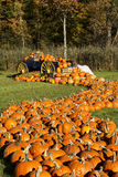 Pumpkins in Vermont Autumn Royalty Free Stock Photography