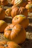 Pumpkins (vertical) Royalty Free Stock Images
