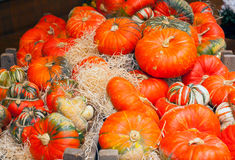Pumpkins Royalty Free Stock Image