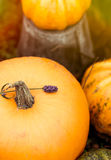 Pumpkins with vintage dreamy toning Stock Photography