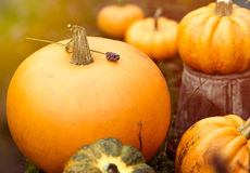 Pumpkins with vintage dreamy toning Royalty Free Stock Images
