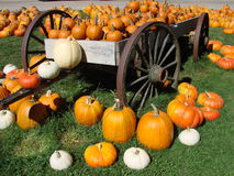 Pumpkins on a Wagon Royalty Free Stock Image