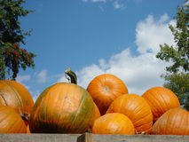 Pumpkins in Wagon. Pile of pumpkins in wagon waiting to be unloaded against blue, cloudy sky Royalty Free Stock Photography