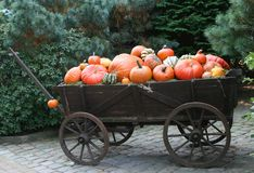 Pumpkins on a wagon. Image of different pumpkins on an vintage wagon Stock Photography