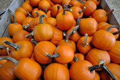 Pumpkins in a Wagon. A wagon crate full of round orange pumpkins, ready for carving on Halloween Royalty Free Stock Photography
