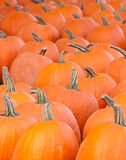 Pumpkins waiting for Halloween. Pumpkings grouped on a farm for the buyers Stock Photos