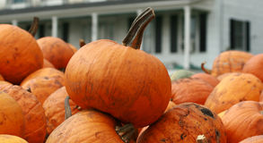 Pumpkins waiting to be cleaned Royalty Free Stock Photography