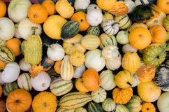 Pumpkins wallpaper Stock Photo