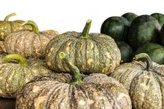 Pumpkins, watermelon Royalty Free Stock Photos