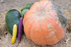 Pumpkins,watermelon and gourd harvest. Stock Photos