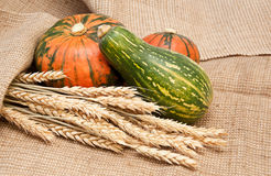 Pumpkins and wheat on a burlap background Stock Photos