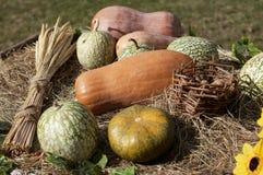 Pumpkins and wheat sheaf Stock Photo
