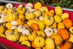 Pumpkins in a wheel barrow stock photos