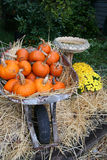 Pumpkins in Wheelbarrow. Pumpkins arranged on hay in outdoor Holiday display Stock Photography