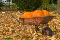 Pumpkins in a wheelbarrow Royalty Free Stock Image