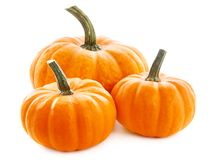 Pumpkins  on white background Stock Images