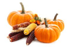 Pumpkins  on white background Royalty Free Stock Image