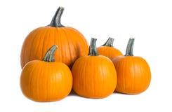 Pumpkins  on White Background #1 Stock Photo