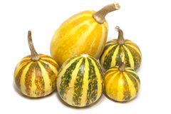 Pumpkins  on a white background. Five little pumpkins  on a white background Stock Photos