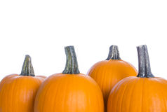 Pumpkins  on White Background #2 Stock Image