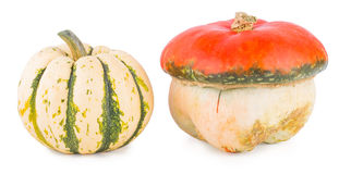 Pumpkins on a white background Stock Image