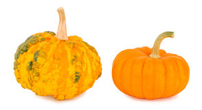 Pumpkins on a white background Stock Photos