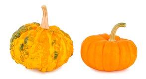 Pumpkins on a white background Stock Photos