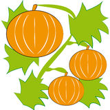 Pumpkins on white background. Vector illustration Royalty Free Stock Photography