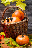 Pumpkins in wicker basket with leaves Stock Photography
