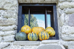 Pumpkins on a Window Stock Images