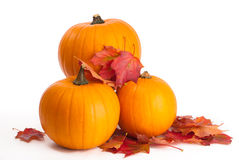 Free Pumpkins With Fall Leaves Stock Photography - 11014922