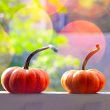 Pumpkins With Light Stock Image