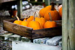 Pumpkins in wood boxes Stock Photo