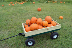 Pumpkins in a wood cart Royalty Free Stock Image