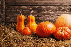 Pumpkins on wooden background Stock Image