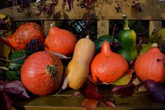 Pumpkins on the wooden bench royalty free stock image