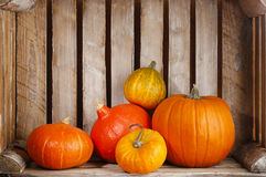 Pumpkins in wooden box Stock Photos