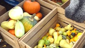 Pumpkins in a wooden box in autumn. Orange, yellow and green pumpkins in a wooden box stock photos