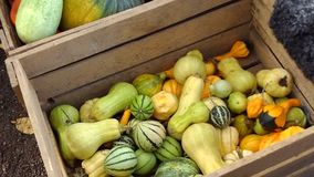 Pumpkins in a wooden box in autumn. Orange, yellow and green pumpkins in a wooden box royalty free stock images