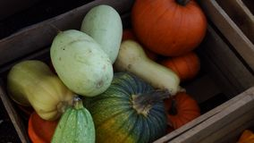 Pumpkins in a wooden box in autumn. Orange, yellow and green pumpkins in a wooden box at harvest time stock photography