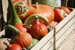 Pumpkins in wooden box Royalty Free Stock Photos