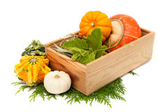 Pumpkins in a wooden box Stock Photos