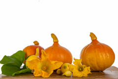 Pumpkins on a wooden table. Pumpkins and flowers on a wooden table Royalty Free Stock Image
