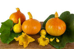 Pumpkins on a wooden table. Pumpkins and flowers on a wooden table Royalty Free Stock Photo