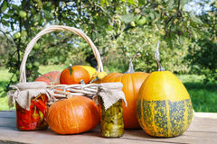 Pumpkins on wooden table in the garden Royalty Free Stock Image